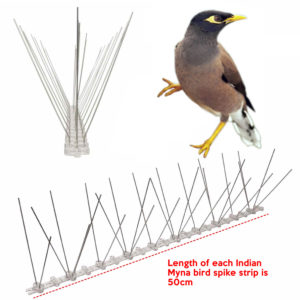 cheapest indian myna bird spike supplier online