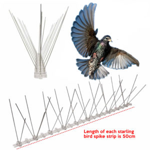cheapest starling bird spike supplier online